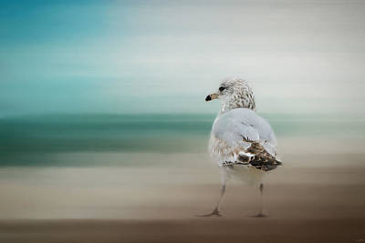 Larus Delawarensis Photograph - Waiting For The Tide by Jai Johnson