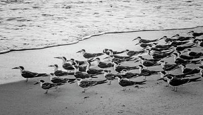 Waiting For The Wave In Black And White Print by Debra and Dave Vanderlaan