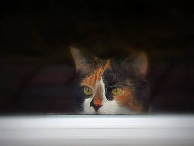 Of Calico Cats Photograph - Waiting For You by Karen Cook