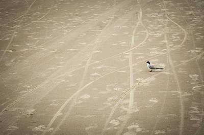 Photograph - Waiting My Turn by Carolyn Marshall