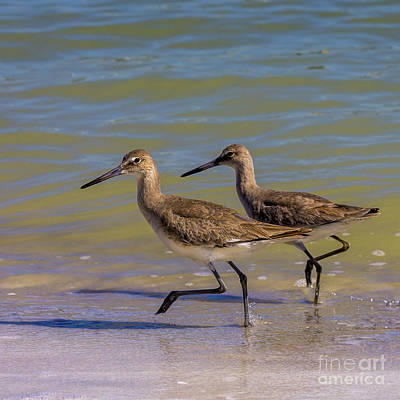 Wading Bird Photograph - Walk Together Stay Together by Marvin Spates