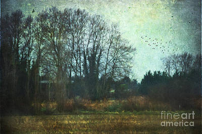 Home Decoration Photograph - Walking The Dog by Robert Brown