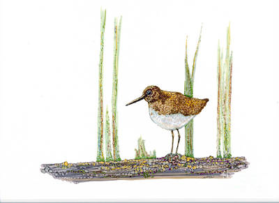 Sandpiper Mixed Media - Walking The Log by Jan Killian