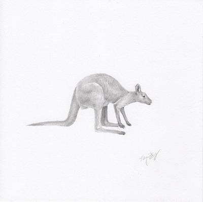Marsupial Drawing - Wallaby by Nancy Ferry
