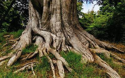 Wandering Tree Roots Print by Garry Gay