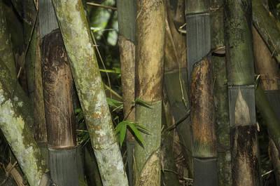 Bamboo House Photograph - Warrior's Garden by Damian Morphou
