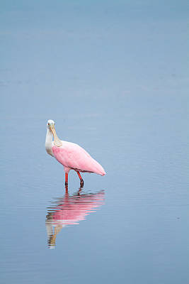 Ibis Photograph - Watchful Spoonbill by J Darrell Hutto