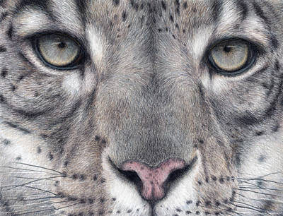 Leopard Drawing - Watching You...snow Leopard by Pat Erickson