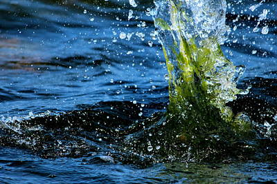 Tangy Photograph - Water Games by Heike Hultsch