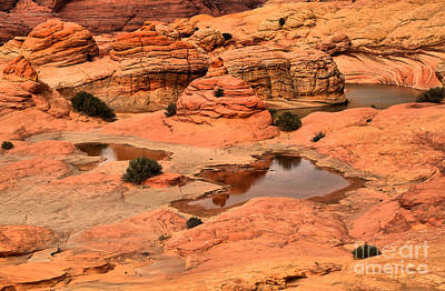 Water In The Petrified Sand Dunes Print by Adam Jewell
