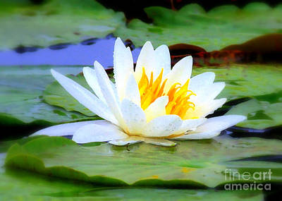 Lilies Photograph - Water Lily - Digital Painting by Carol Groenen