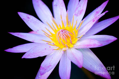 Photograph - Water Lily by Eyzen Medina