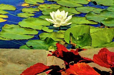 Koi Digital Art - Water Lily In Koi Pond by Geraldine Scull