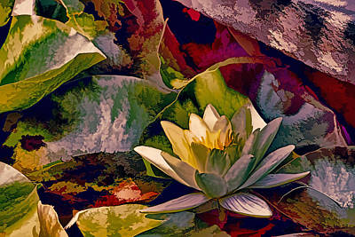 Water Lily In Living Color Print by Geraldine Scull
