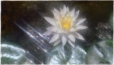 Water Lily In Sunlight Print by Jeff Kolker