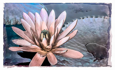 Water Lily Vintage Art Print by Julie Palencia
