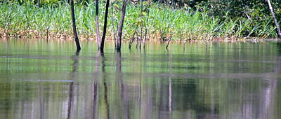 Jungle Photograph - Water Reflections On Amazon River by HQ Photo