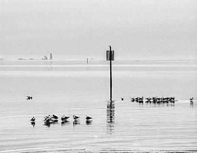 Water Walking Birds Print by Michael Thomas