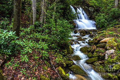 West Fork Photograph - Waterfall Back Fork Of Elk River by Thomas R Fletcher