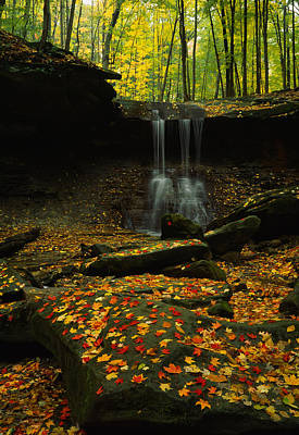 Fallen Leaf On Water Photograph - Waterfall In A Forest, Blue Hen Falls by Panoramic Images