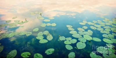 Waterlily Photograph - Waterlilies Home by Priska Wettstein