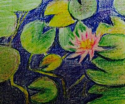 Waterlily Drawing - Waterlily Pond 2 by Hae Kim