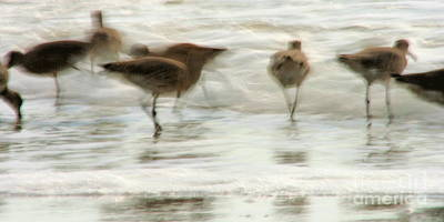 Beach Theme Decorating Photograph - Plundering Plover Series by Angela Rath