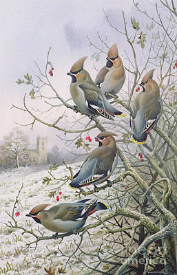 Winter Scenes Painting - Waxwings by Carl Donner