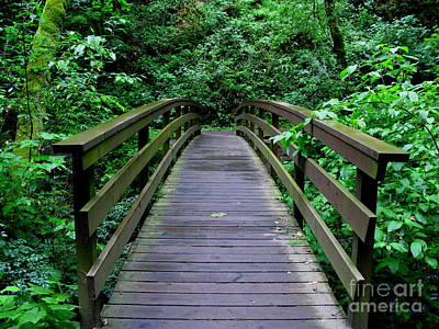 Green Forest Photograph - We All Have Bridges To Cross by PJ  Cloud