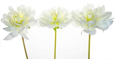 Trio Photograph - We Glow by Rebecca Cozart