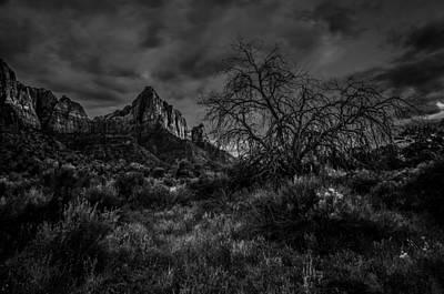 Zion National Park Photograph - Weather Tree Zion National Park by Scott McGuire