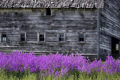 Weathered Barn - Flowers Print by Nikolyn McDonald