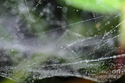 Spiderweb Photograph - Web After Rain 2 by Angelo DeVal