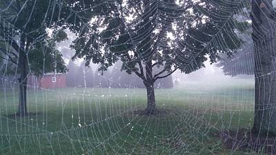 Web Of Life Photograph - Web Of Life by Jan Wolterman
