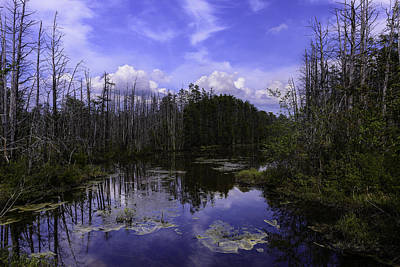 Webb Cedar Swamp Blog Print by Louis Dallara