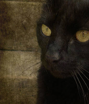 Black Cat Photograph - Wee Sybil  by Paul Lovering