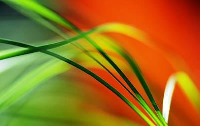 Weeds Print by Catherine Lau