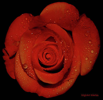 Weeping Rose Print by DigiArt Diaries by Vicky B Fuller
