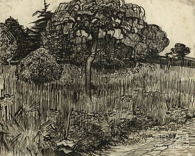 Weeping Drawing - Weeping Tree by Vincent Van Gogh
