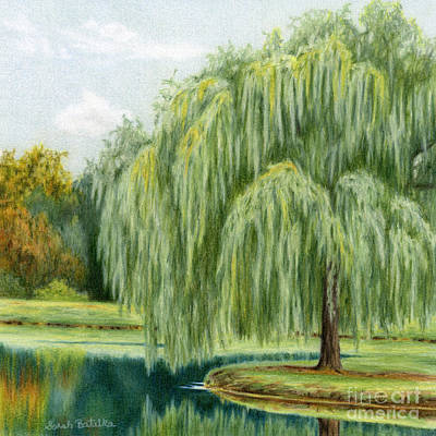 Edge Drawing - Under The Willow Tree by Sarah Batalka