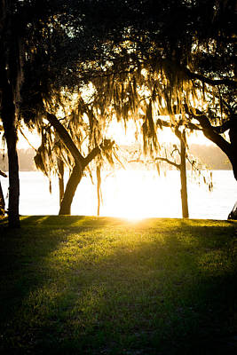 A Summer Evening Landscape Photograph - Spanish Moss At Sunset by Shelby Young