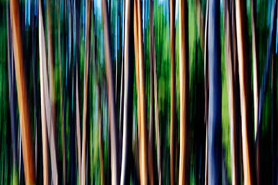 Abstraction Photograph - Weeping Yellowstone Trees by Todd Klassy