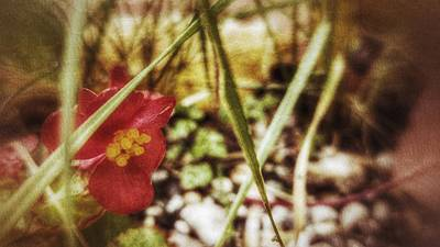 Flower Express Photograph - Weinberg by Isabella Abbie Shores