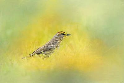 Warbler Photograph - Welcome New Friend by Jai Johnson