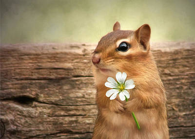 Squirrel Digital Art - Welcome Spring by Lori Deiter