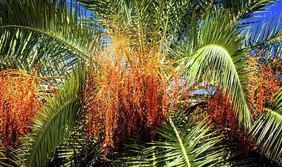 Blue Fireworks Photograph - West Palm Celebration by Karen Wiles