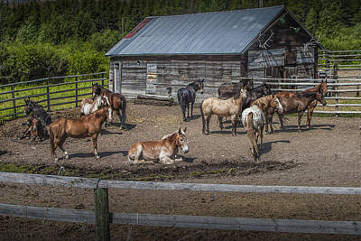 Western Horses At An Outfitters Corral Print by Randall Nyhof