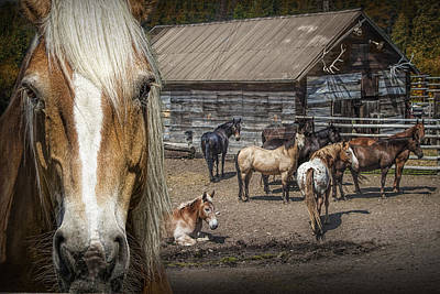 Western Horses In An Outfitters Corral Print by Randall Nyhof