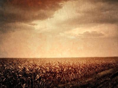 Cornfield Digital Art - Wet Season by Wim Lanclus