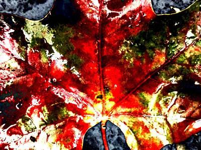 Wet Single Leaf Print by Beth Akerman